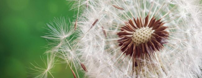 vivamus-allergies